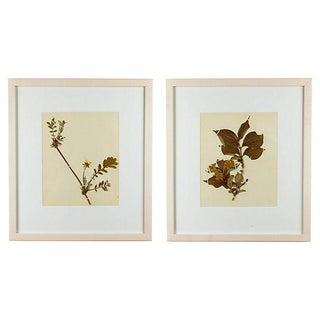 Vintage Framed Herbariums - A Pair