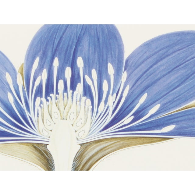 Image of Museum of London Flower Dissection V Print