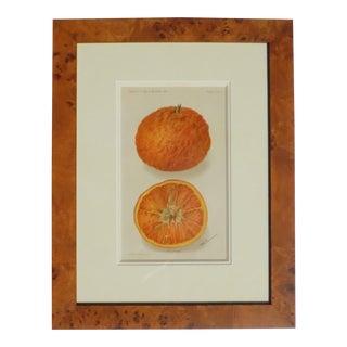 1907 Antique King Orange Framed Chromolithograph