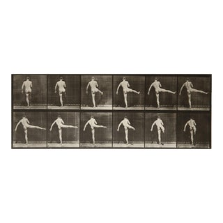 Animal Locomotion Plate 369 by Eadweard Muybridge
