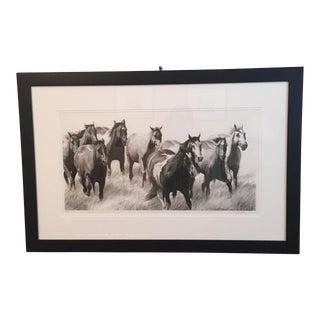 David Bjurstrom Framed Drawing of Horses