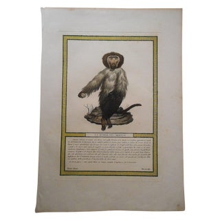 18th C. Monkey Copperplate Engraving