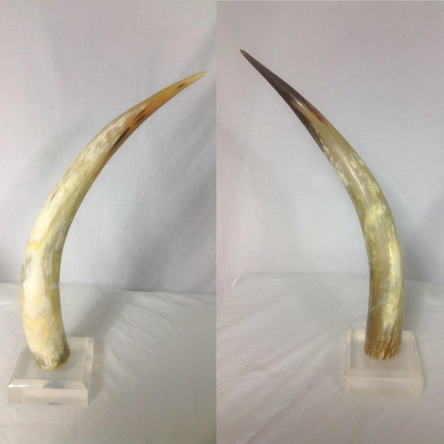 Image of 1960s Horns - A Pair