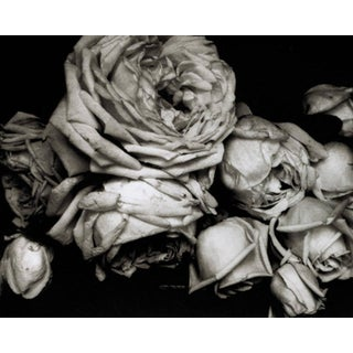 Heavy Roses, Voulangis, France, 1914: The Early Years 1900-1927