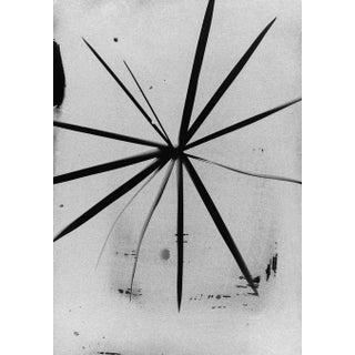 """Botanical Light Drawing 2,"" Rinne Allen"