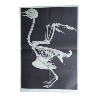 Anatomy Of A Bird Poster