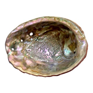 Natural Iridescent Abalone Shell