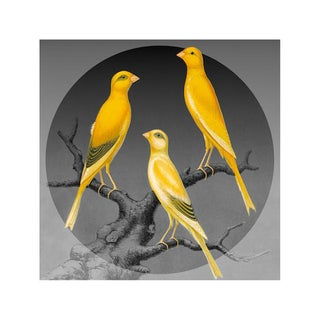 Antique 'Canaries on Gray' Archival Print