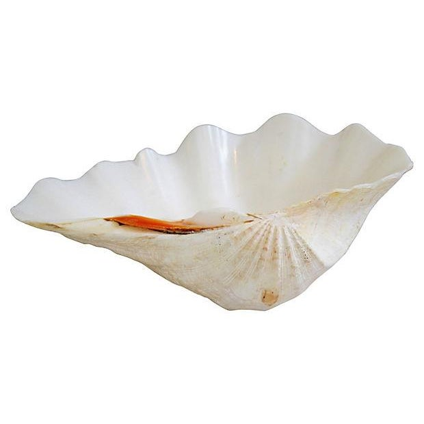 Image of Natural Saltwater Clamshell