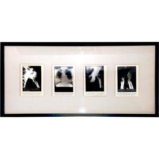 Vintage Miniature X-Rays - Set of 4