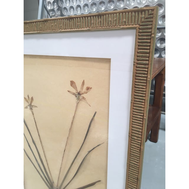 Faux Bamboo Framed Pressed Orchids - A Pair - Image 5 of 7