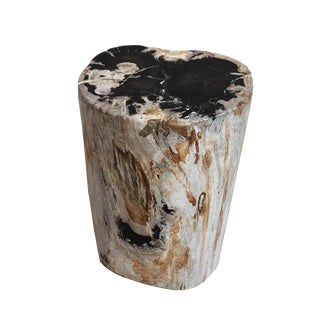 Polished Petrified Wood Stool