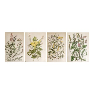 1850's Hand Colored Botanical Illustrations - Set of 4