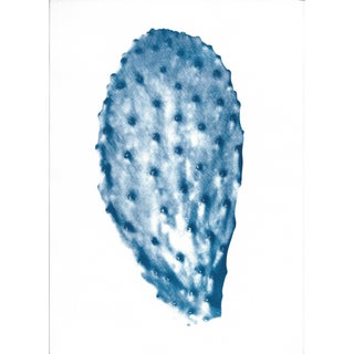 Succulent Cactus Leaf Cyanotype Print