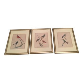 Vintage Bird Prints - Set of 3