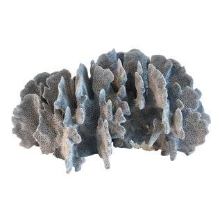 Natural Blue Coral Specimen