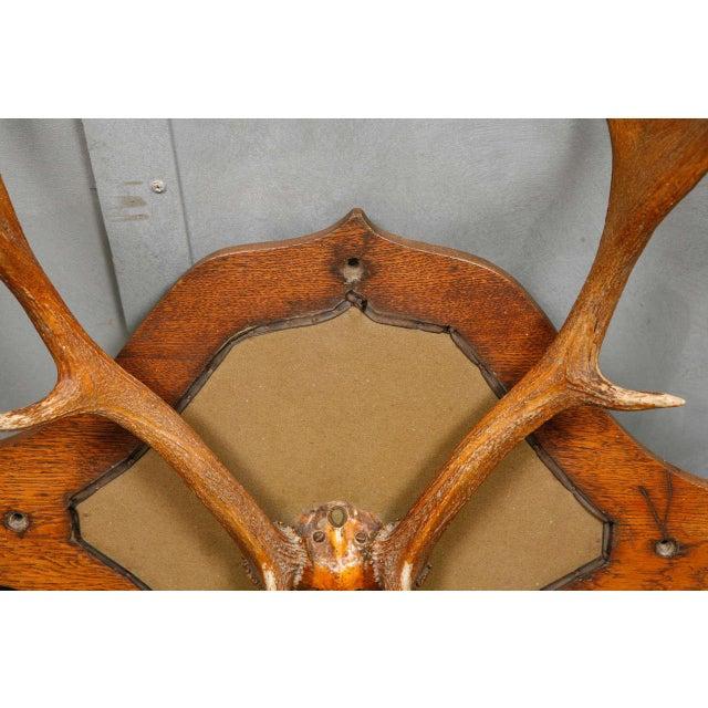 Victorian Carved Oak and Antler Coat/Hat Rack - Image 5 of 8