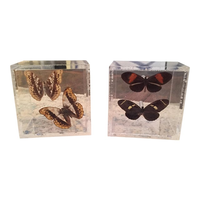 Lucite Cube Box Encased Butterfly Specimens Oddities Curiousities- a Pair - Image 1 of 11