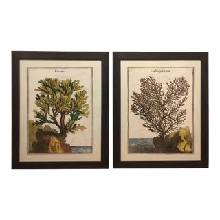 Framed Louis Charcot's Coral Prints - Pair