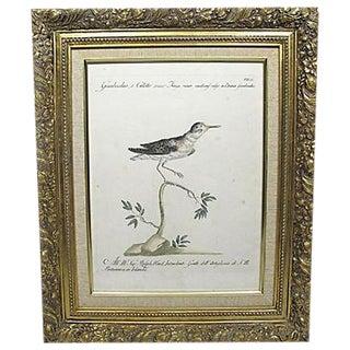 18th Century Ralph Ward Bird Engraving