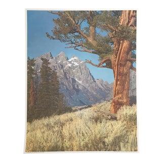 Harrison R. Crandall Grand Tetons Print