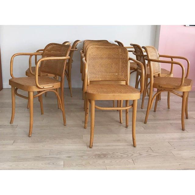 "Mid-Century Josef Hoffmann ""Prague"" 811 Cane & Bentwood Armchairs - Set of 10 - Image 10 of 11"