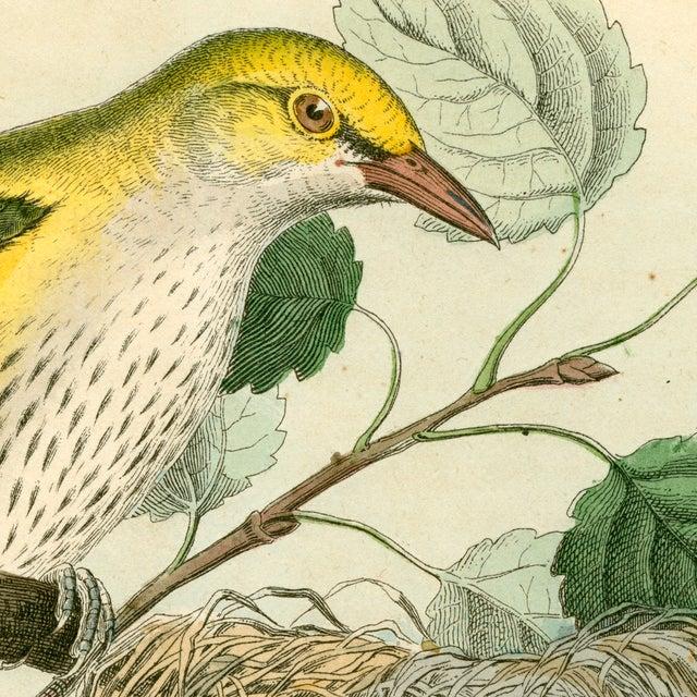Antique Birds & Nest Archival Print - Image 3 of 4