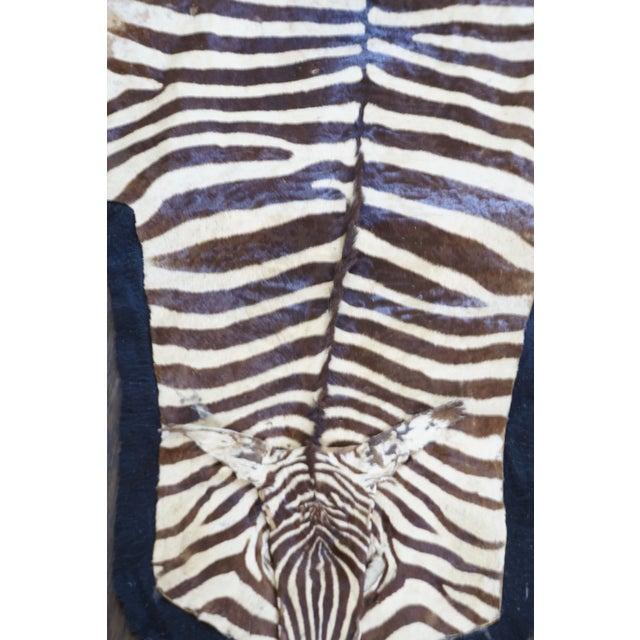 Authentic Zebra Hide Rug On Felt - 5' X 10'