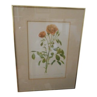 Early Charles Raymond Signed & Numbered Botanical Lithograph