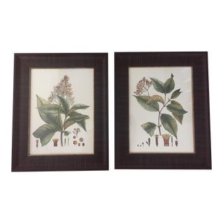 Framed Botanical Prints - A Pair