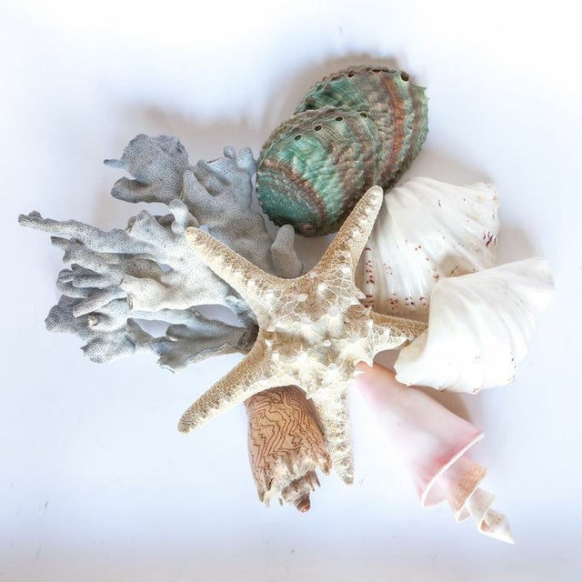 Image of Collection of Decorative Sea Shells