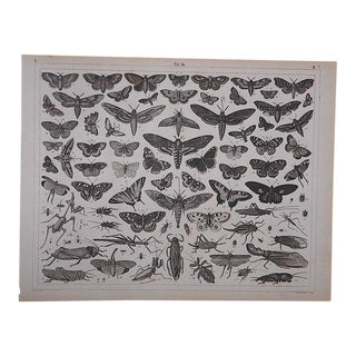 Antique-Lithograph-Insects