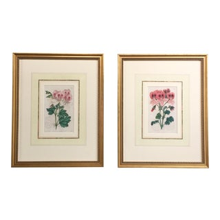 Hand Colored Botanical Engravings - A Pair
