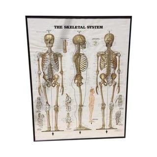 Vintage Skeletal System Medial Poster Chart