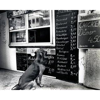 The Dresden Dog Original Black & White Photograph