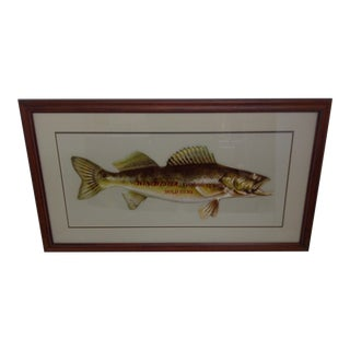 """Winchester Fishing Lures"" Advertising Sign"