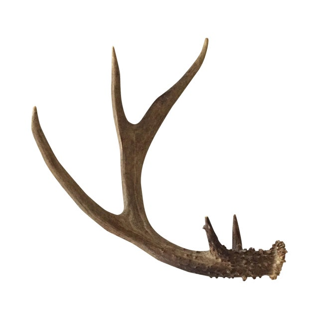 5 Point Deer Antler - Image 1 of 7