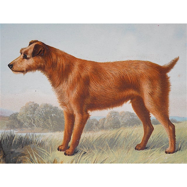 Antique Dog Irish Terrier Lithograph - Image 3 of 4