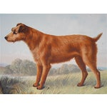Image of Antique Dog Irish Terrier Lithograph