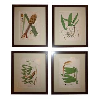 1903 Palm Engravings by Joao Barbosa Rodrigues