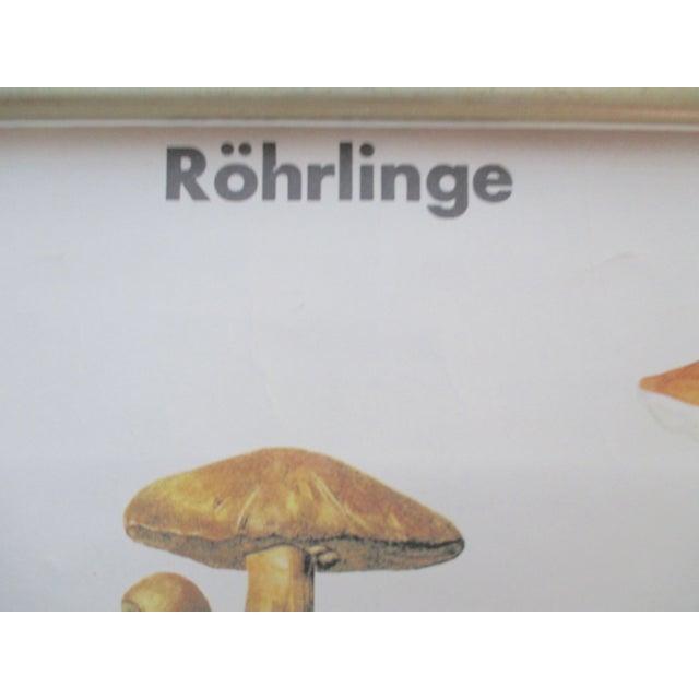 Image of Antique German School Chart of Mushrooms