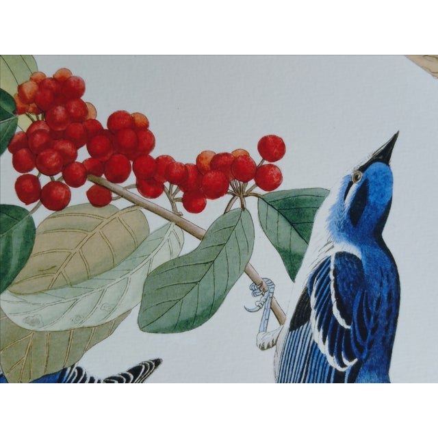 Image of Audubon Bird Prints