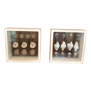 Shadow Box Framed Sea Shells - A Pair