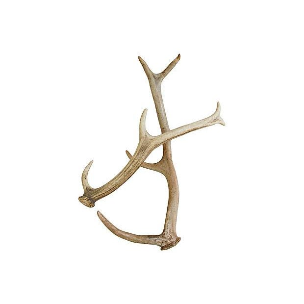 Naturally-Shed Deer Antlers - Pair - Image 2 of 3