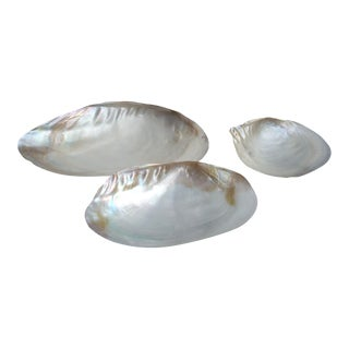 Nautical Iridescent Clam Seashells