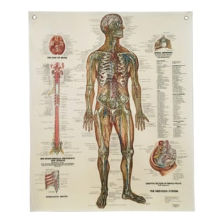 Mid-Century Nervous System Medical Poster