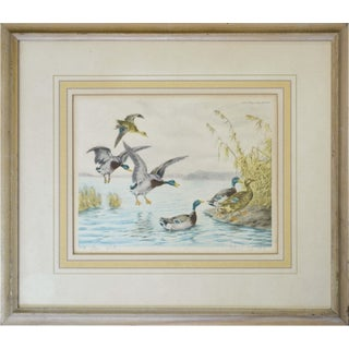 Mallard Ducks Painting