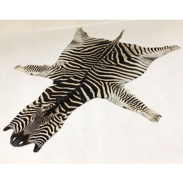 Natural Zebra Hide Rug - 8'3 x 7'3 - Image 2 of 3