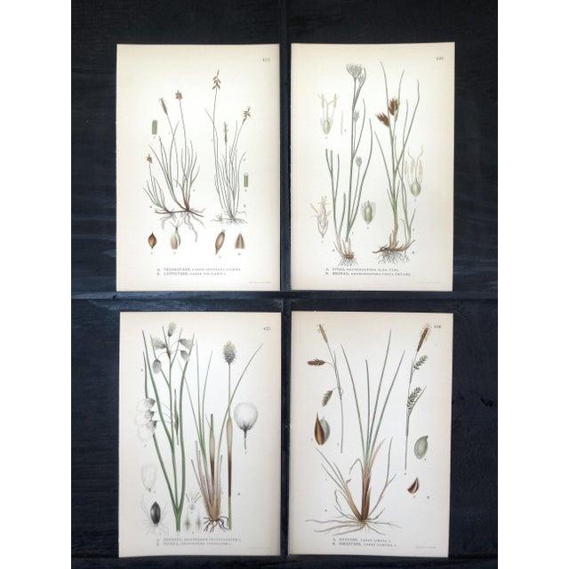 Swedish Floral Prints, Set of 4 - Image 2 of 6