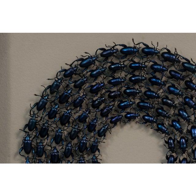 Image of Sarreid Ltd Green Beetles Shadow Box